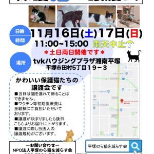 今後のイベントのお知らせと譲渡会参加猫チラッとご紹介