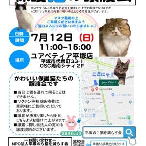 譲渡会参加猫たちご紹介