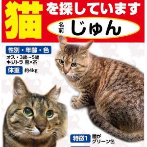 【迷子猫】神奈川県二宮町川匂よりキジトラ♂を探しています【捜索中】