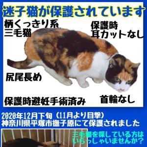 【保護猫情報】神奈川県 平塚市 撫子原 三毛猫 成猫 メス【保護しています】