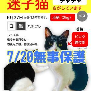 【速報】チャチャちゃん無事保護!