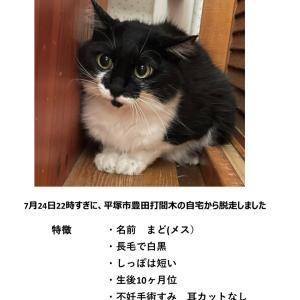 【迷子猫】平塚市 豊田打間木 黒白猫【探しています】