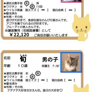 譲渡会参加猫ご紹介②