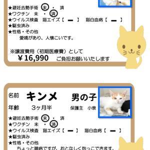 譲渡会参加猫ご紹介①