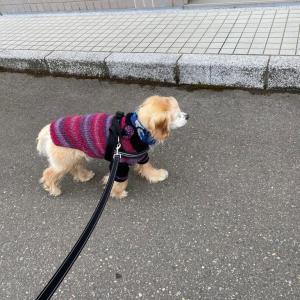 本日も街中散歩