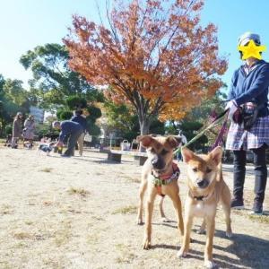 〓洋君と萩ちゃん、秋晴れの公園で出会う〓