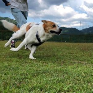 犬は 走る!