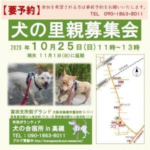 【予約制】10月25日(日)犬の里親募集会