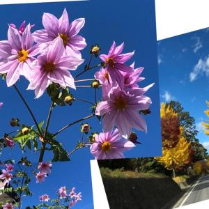 【定期掃除】鹿沼市西茂呂の6棟定期掃除で目の前の花が
