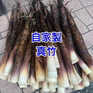 【旬】メンマの材料の真竹今年初物前山から採って来た