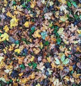 びしょ濡れな秋のお散歩