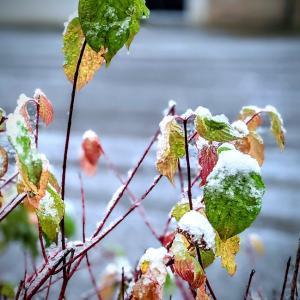 初雪!恐るべしエルフパワー。