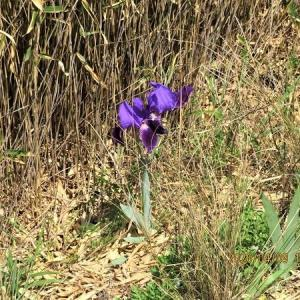 堤防で見る園芸種の花