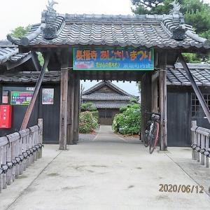 長福寺のアジサイ