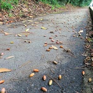 道端の小さい秋