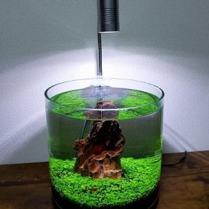 WaterPlants MistFormula
