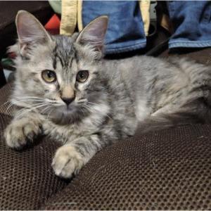 今日の子猫(名前はmei)