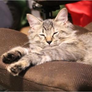 今日の子猫(眠~い)