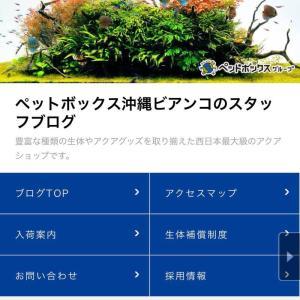 那覇市おもろまちにある沖縄ビアンコをご存じですか?西日本最大級のアクアショップなのです☆