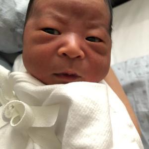 産まれました(*´ω`*)