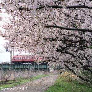 【長野電鉄】2500系 今年も桜開花