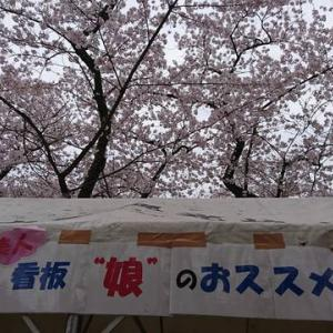 楯山公園🌸桜まつり🌸