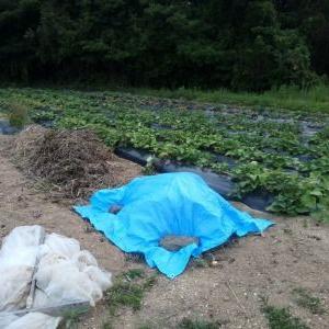 畑の堆肥作りをやってみました