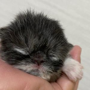 子猫❤(エキゾ)