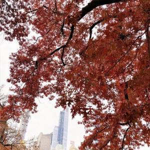 ニューヨークひとり旅⑬摩天楼と紅葉狩り【CENTRAL PARK】