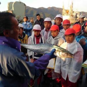 「釜石魚市場でアオリイカを見た!!」の巻