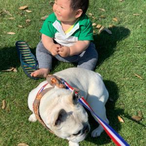 人生初の犬