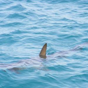 サメが湧く季節に入る