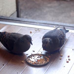 ベランダの鳥達