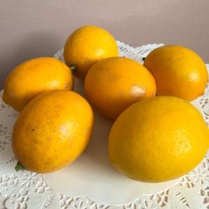国産レモンを使ってガトーウィークエンドのレッスンします♪