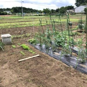 粟・稗・黍の栽培開始  〜鳥の餌シードを育てよう!2020 (1) 〜