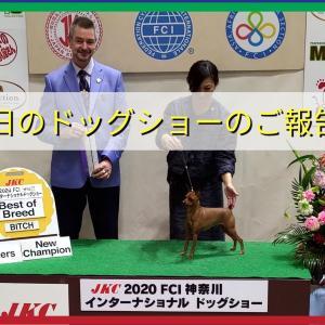 FCI神奈川インターナショナルドッグショーのご報告