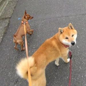 コテツとお散歩 YouTube