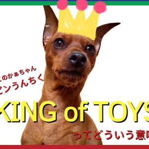 """ミニピンが """"King of Toys"""" って呼ばれるのは何故?"""