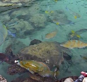 釣りさーが一番癒される池(笑)