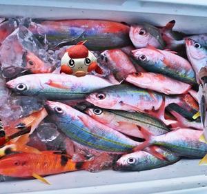 THEグルクン釣り