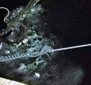 【巨魚ヒットの瞬間】ダツを餌に使うと大体化け物が喰ってくる!!