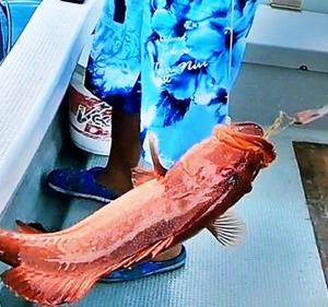 沖縄の赤い宝石が口からスッポ~ン!!【泳がせ釣り】