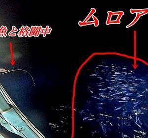 水深1000mの泳がせ釣りは夢がある!!【ムロアジ大量乱舞】