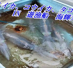 【沖縄エギング、エジング、ディープエギング】 海輝丸さん