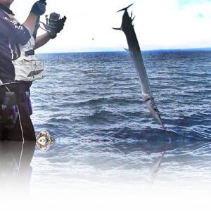 このエサを使うと止まらない魚がよく当たるので注意です・・・【ダイワスピニングリール ドラグ音ASMR】~ソルティガ