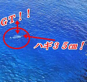 浮きまくりの巨大GT(ガーラ、ロウニンアジ)を釣ろうとしてみた!!【沖縄の釣り王国 与那国 ~序章】