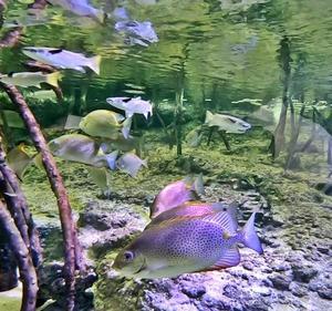【カーエー高画質】釣り人目線の水族館
