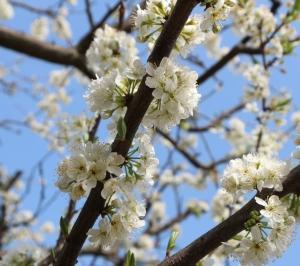 四月(卯月)春の花
