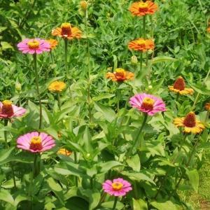 8月31日の花