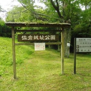城址公園 花菖蒲